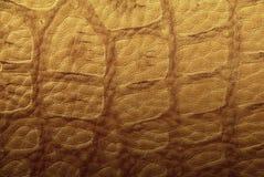 skóra krokodyla Obraz Stock