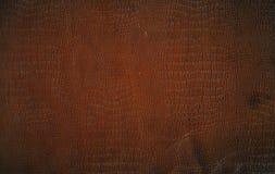 skóra krokodyla fałszywy brown Zdjęcia Royalty Free