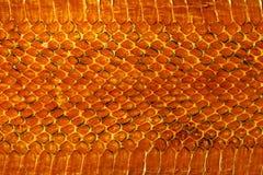 skóra węża Zdjęcie Stock