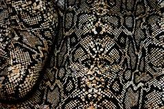 skóra węża Zdjęcie Royalty Free
