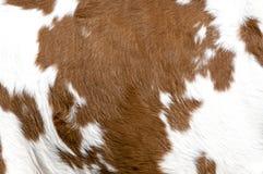skóra wołowa Fotografia Stock