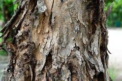 Skórki drzewo Zdjęcia Stock