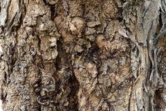 Skórki drzewo Obraz Stock