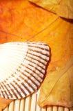 skórki liści jesienią Zdjęcia Royalty Free