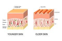 Skóry starzenie się różnica między skórą potomstwa p i starsze osoby royalty ilustracja