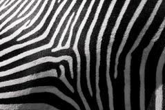 skóry zebra Fotografia Royalty Free