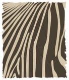 skóry zebra ilustracji
