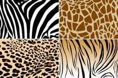 skóry zwierząt konsystencja zdjęcie royalty free