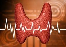 Sköldkörtel som analyseras i klinisk undersökning av endokrin körtelsystemet Diagnostiskt diagram av sjukdomen för endokrin körte royaltyfri illustrationer