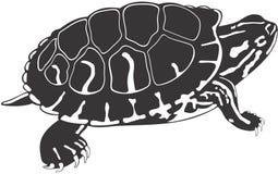sköldpadda Arkivfoton