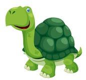 Sköldpadda Royaltyfri Fotografi