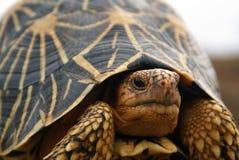 sköldpadda Arkivfoto