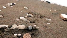 Sköldpadda för Carettacarettahatchling som rusar in mot havet royaltyfria bilder