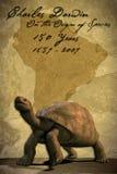 sköldpadda för clippinggalapagos bana Arkivbilder
