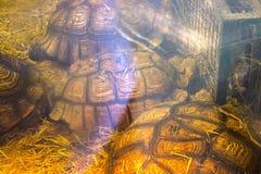 sköldpadda för grönt hav under fönstret Royaltyfri Foto