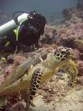 sköldpadda för hav för dykphilippines sabang Arkivbilder