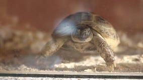 Sköldpadda hemma arkivfilmer