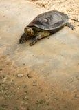 Sköldpadda i den dammThailand zoo Arkivfoto
