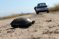 Sköldpadda i fältet Arkivfoton