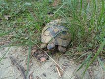 Sköldpadda i skogen royaltyfri fotografi