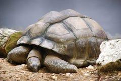 Sköldpadda i zoo arkivfoto