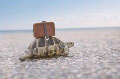 Sköldpadda med resväskan arkivfoto