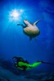 Sköldpadda och dykare i Tenerife Arkivfoto