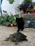 Sköldpadda och katt royaltyfria foton