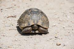 Sköldpadda på banan Arkivfoto