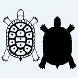 Sköldpadda På blå bakgrund Arkivbilder