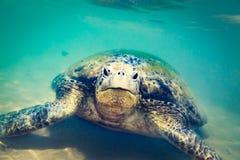 Sköldpadda på den Hikkaduwa stranden Arkivfoto