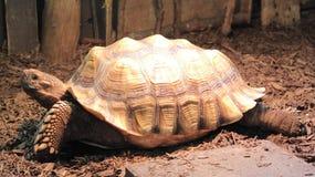 Sköldpadda på fågelkungarikeaviariet, Niagara Falls, Kanada Fotografering för Bildbyråer