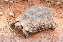 Sköldpadda på jordningen Arkivbilder