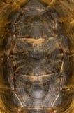 Sköldpadda Shell Detail Royaltyfria Foton