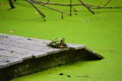 Sköldpadda som önskar på en stjärna royaltyfria bilder