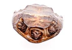 Sköldpadda som isoleras in på vit Royaltyfri Bild