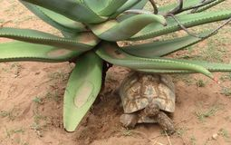 Sköldpadda som kopplar av i skuggan Royaltyfri Foto