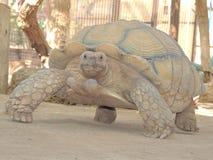Sköldpaddabehållare Arkivfoton
