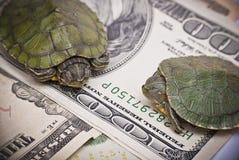 Sköldpaddaekonomi arkivfoto