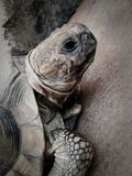 Sköldpaddaförgrund Royaltyfria Foton