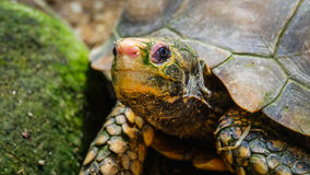 Sköldpaddahuvud Fotografering för Bildbyråer