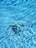 Sköldpaddaliv royaltyfri fotografi