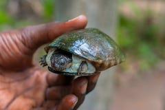 Sköldpaddan behandla som ett barn arkivbilder