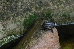 Sköldpaddan behandla som ett barn Royaltyfri Fotografi