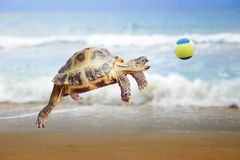 Sköldpaddan hoppar och fångar bollen Arkivbild