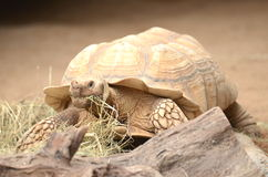Sköldpaddan i Loro parkerar i Puerto de la Cruz på Tenerife, kanariefågelöar Arkivbilder