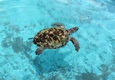 Sköldpaddan i vattnet arkivbilder