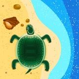 Sköldpaddan kryper för att segla i havsskalen på sanden och stenarna Royaltyfria Bilder
