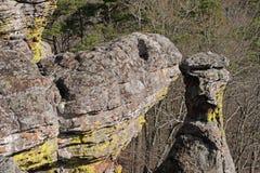 Sköldpaddan vaggar på en Forest Cliff Arkivbild