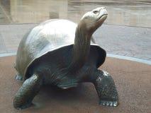 Sköldpaddastaty Arkivbild